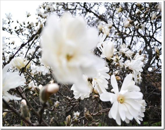 flower 003