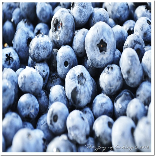 blueberries 041