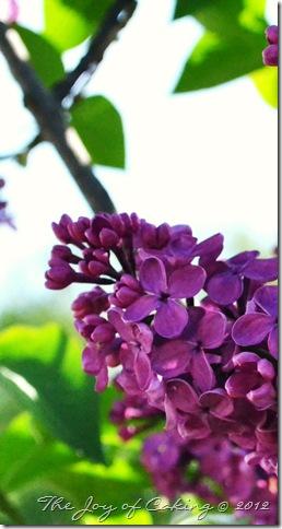 flowers 045