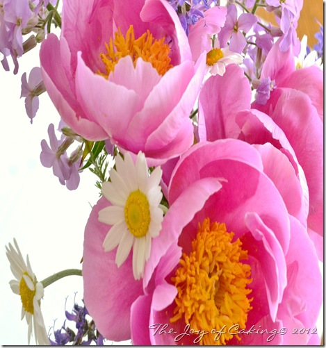 peonies and frolic 019