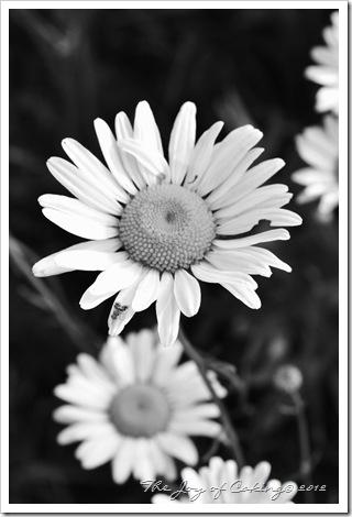 flowers 019greyscale