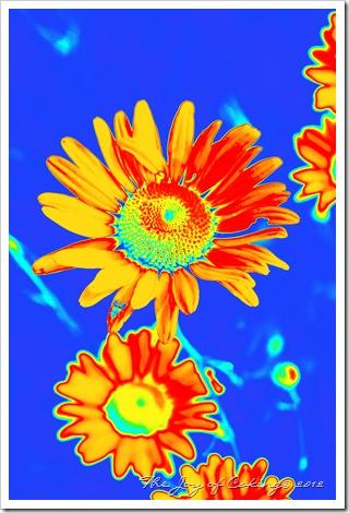 flowers 019rainbow