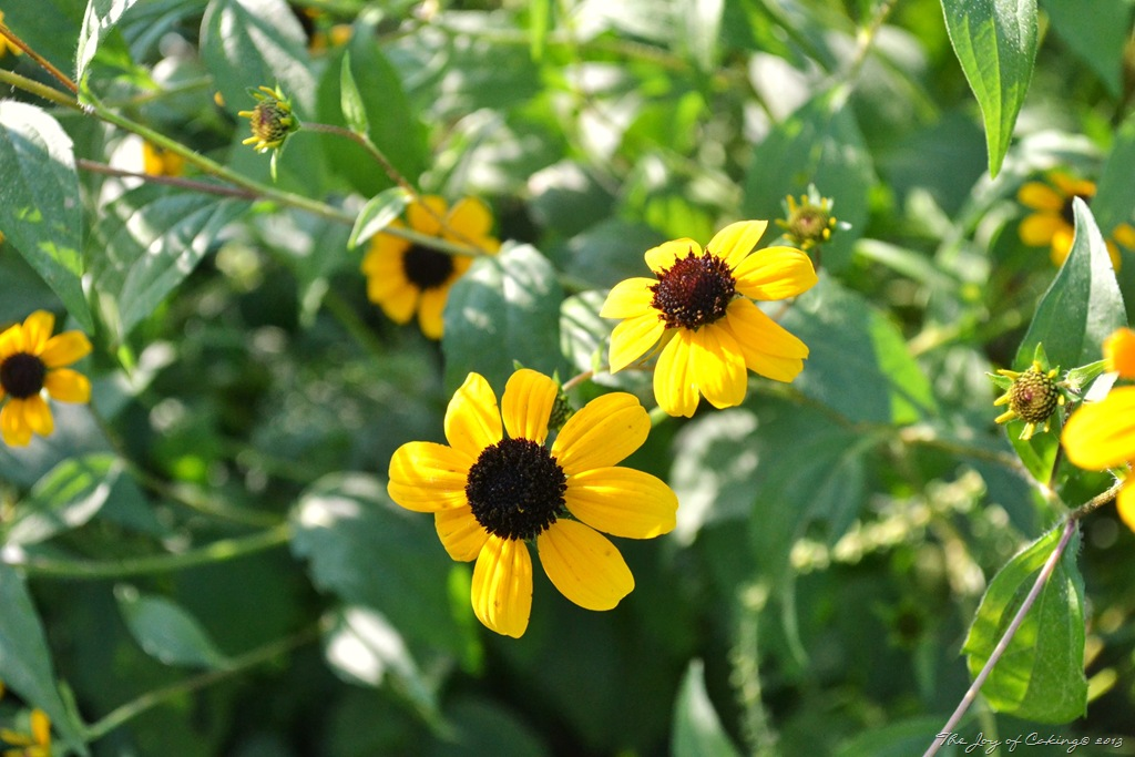 Four Interesting Things About The Black Eyed Susan The Joy Of Caking